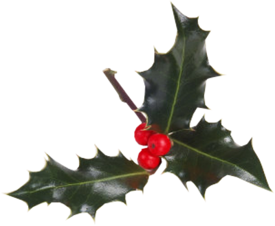 Christmas-Berries-psd96682 - Eau Lovely - Rachel McCann
